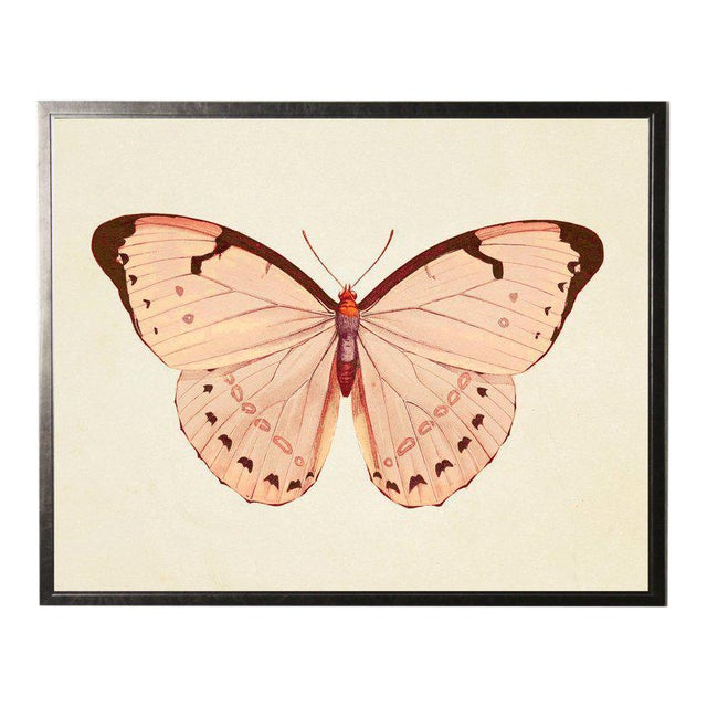 Horizontal Pink Butterfly Print in Pewter Shadowbox For Sale