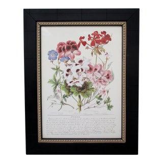 Botanical Print, Geraniaceae For Sale