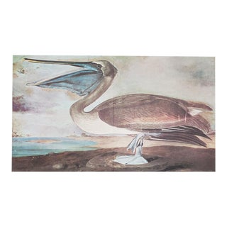 1966 Figurative Lithograph of Brown Pelican by John James Audubon For Sale