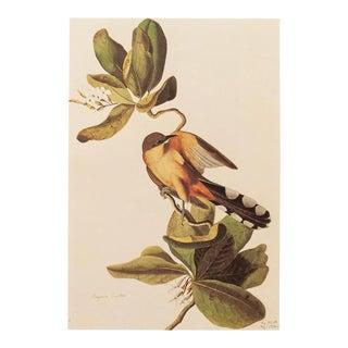1960s Vintage Audubon, Mangrove Cuckoo Lithograph For Sale