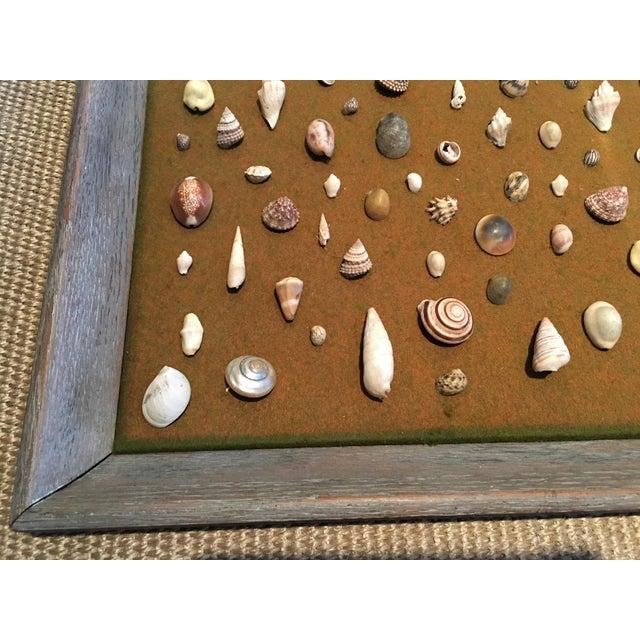 Cottage Shell Specimen Framed Display For Sale - Image 3 of 4
