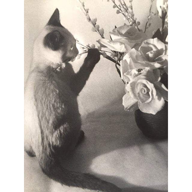Siamese Cat and Roses 1956 Exibited Photograph - Image 1 of 4