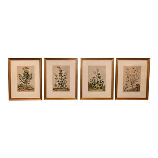 Antique Hand Colored Botanical Prints - Set of 4 For Sale