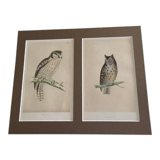 Mid 20th Century Book Pages of Owls, Matted For Sale