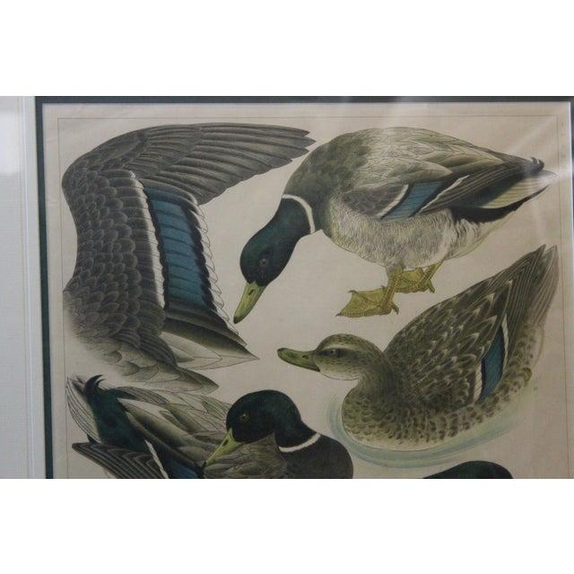 Japanese Mallards Print in Gilt Frame For Sale In New York - Image 6 of 7