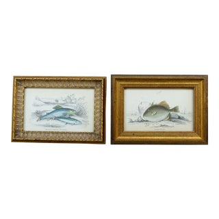 Vintage Fish Engravings - A Pair For Sale