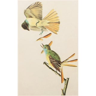 1966 Vintage Audubon Great Crested Flycatcher Reproduction Print For Sale