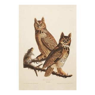 1990s Great Horned Owls by Audubon, Large Cottage Print For Sale