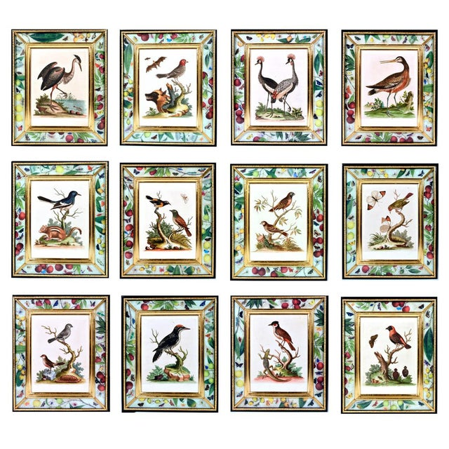 C. 1740 George Edwards Engravings of Birds - Set of 12 For Sale - Image 12 of 12