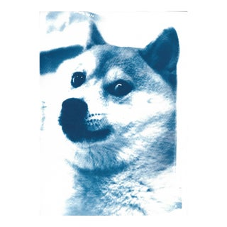 Limited Edition, Doge Meme! Wow! Much Cool! Cyanotype Print on Watercolor Paper For Sale