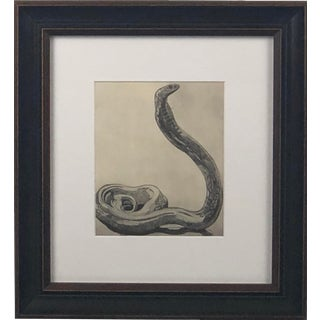 Antique Paul Jouve Framed Cobra Print For Sale