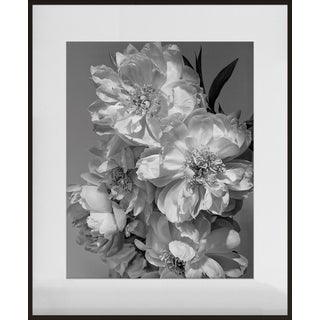 """Coral Charm Peony III"", Contemporary, Framed, Photograph by Jean Karotkin For Sale"