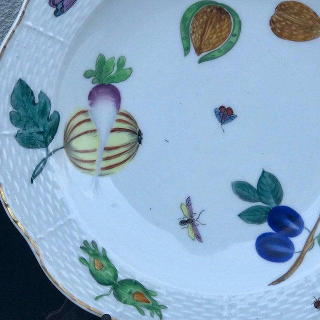 Three Antique European Naturalistic Porcelain Plates For Sale - Image 12 of 13