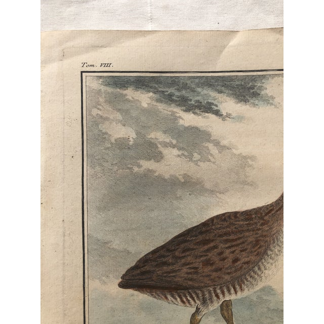 18th Century French Bird Engraving Signed by Jacques De Sève Featuring a Rale De Terre For Sale - Image 9 of 13