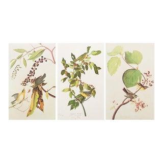1966 Audubon Lithograph Prints - Set of 3