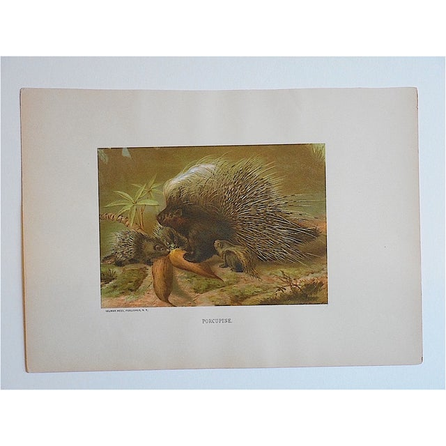 Lodge Antique Porcupine Lithograph For Sale - Image 3 of 3