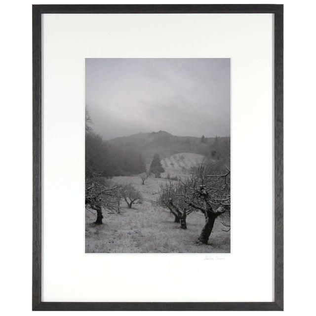 "Contemporary Gaétan Caron ""Orchard in Snow"" Framed Mendocino Photograph, 2010 For Sale - Image 3 of 5"