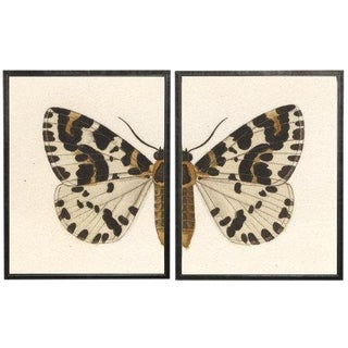 "Split White, Black, and Brown Butterfly - 38"" X 25"" For Sale"