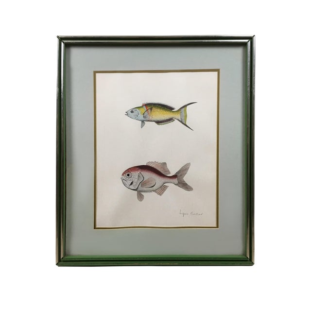 Vintage Original Freshwater Fish Couplet Gouche Painting For Sale