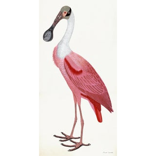 Roseate Spoonbill Poster Styled After Olof Rudbeck For Sale