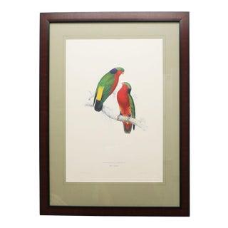 Framed Vintage Reproduction of Edward Lear's Kuhl's Parrakeet For Sale