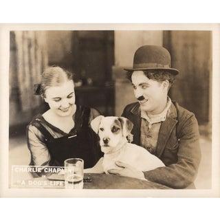 A Dog's Life 1918 U.S. Scene Card For Sale