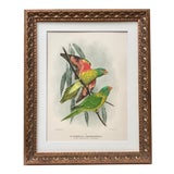 Image of Antique Hand Color Lithograph of Parrots by Mathew C.1910 For Sale