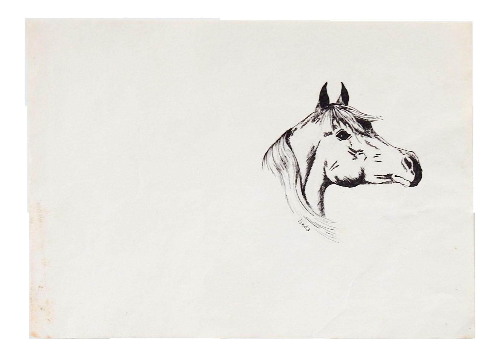 Pen Ink Arabian Horse Drawing Chairish
