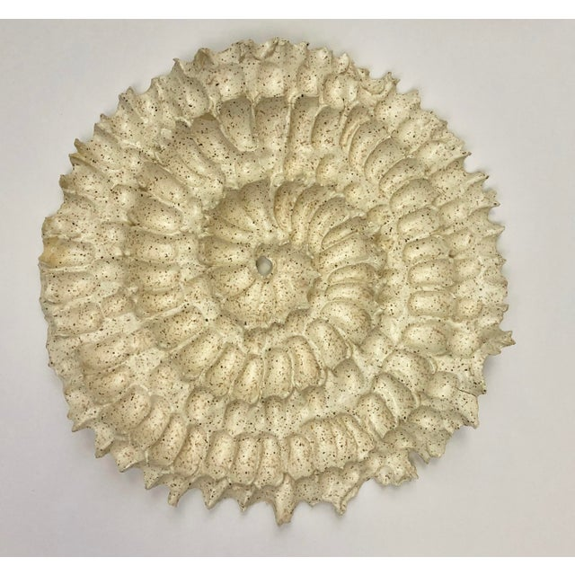 2010s Shell Inspired Hanging Wall Art Sculptures - Set of 3 For Sale - Image 5 of 6