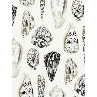 Sample, Scalamandre Coquina, Graphite Fabric For Sale