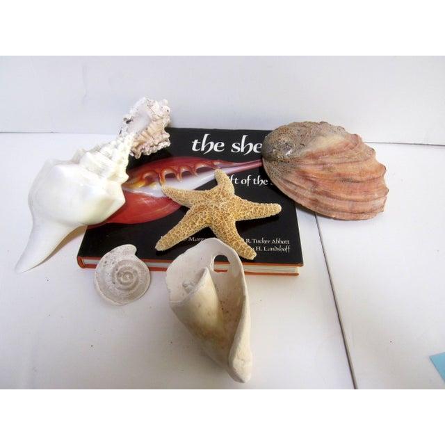 Coastal Collection Sea Shells Shell - Image 4 of 4