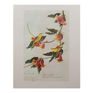 1960s Cottage Style Lithograph of a Rathbone Warbler by John James Audubon