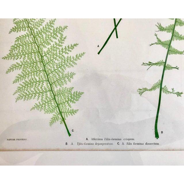 Mid 19th Century 19th Century Bradbury & Evans Nature Printed Fern Print For Sale - Image 5 of 6