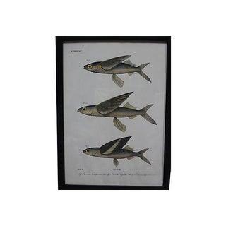 1862 Pieter Bleeker Exotic Fish Prints - Set of 2 Preview