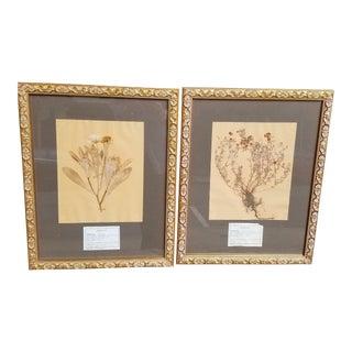 Vintage Decorative Framed Paris Botanical Herbier Specimens - A Pair For Sale