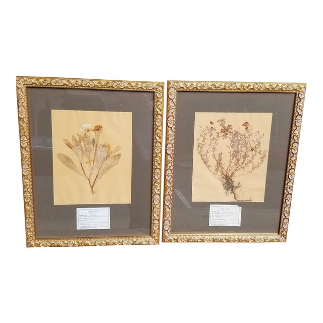 Vintage French Decorative Framed Paris Botanical Herbier Specimens - a Pair For Sale
