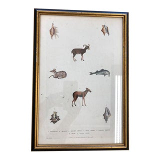 18th Century Framed Animal Print For Sale
