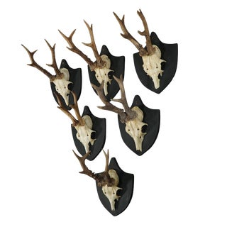 Six Large Antique Deer Trophies on Wooden Carved Plaques Ca. 1870 For Sale