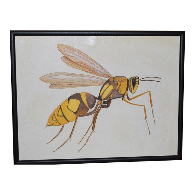 Insect Ant Pencil Paper Framed Art Still Life Painting Drawing Signed Payne For Sale