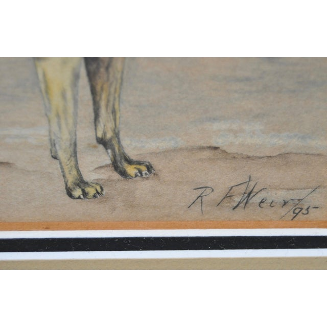 1895 Bullmastiff Watercolor by R.F. Weir For Sale - Image 4 of 5