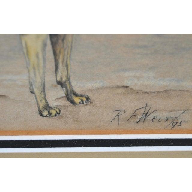1895 Bullmastiff Watercolor by R.F. Weir - Image 4 of 5