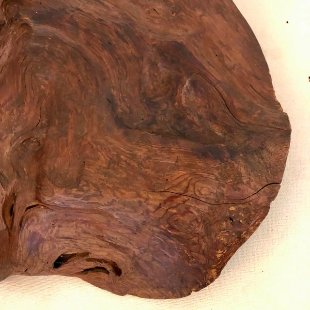 Redwood Naturally Formed Sculpture For Sale - Image 9 of 11