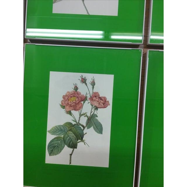 Framed Rose Botanical Prints - Set of 8 - Image 6 of 10