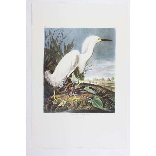 J. J. Audubon Snowy Heron Print - Image 2 of 4
