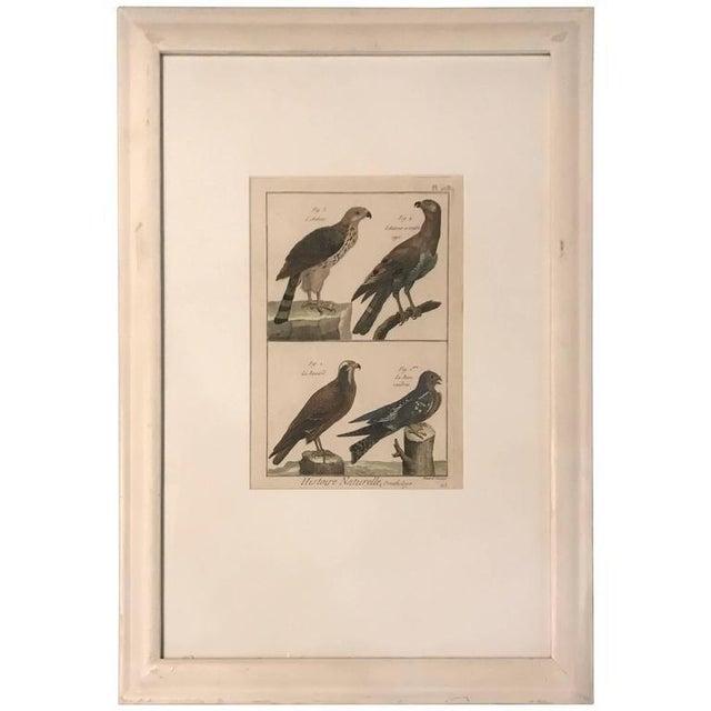 19th Century Histoire Naturelle Hawks Print For Sale In Boston - Image 6 of 6