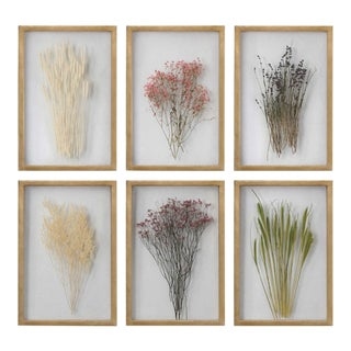 Preserved Blossom Art Work - 6 Pieces For Sale