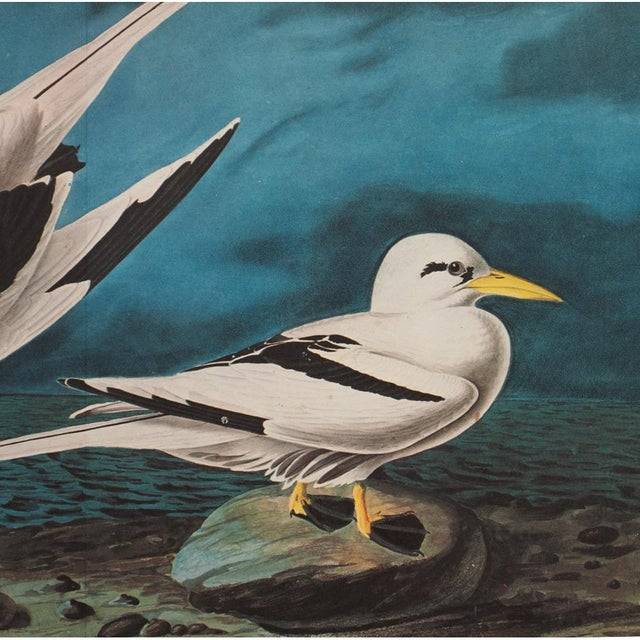 "1960s 1966 ""White-Tailed Tropic Bird"" Lithograph Print by Audubon For Sale - Image 5 of 7"