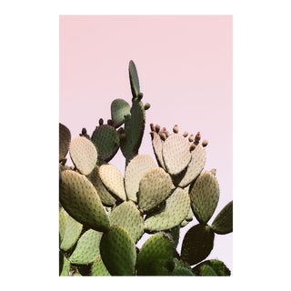 Large Pink Cactus Print - Desert Succulent - Unframed For Sale