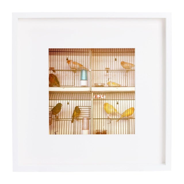 "Alicia Bock ""Marché aux Oiseaux II"" Framed Print - Image 1 of 2"