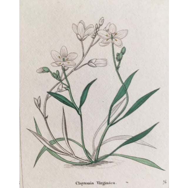 Botanicals by Benjamin Maund C. 1854 For Sale - Image 4 of 8